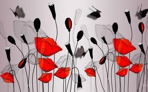 Картинка цветы, бабочка, рисунок, маки, вектор