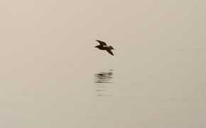 Обои минимализм, тень, птица