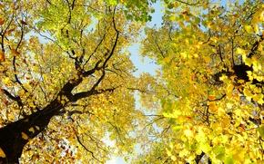 Картинка небо, ствол, деревья, крона, ветки, осень, листья