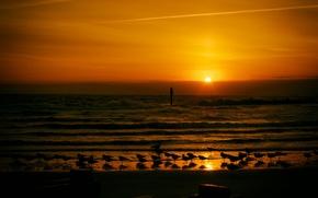 Картинка волны, закат, чайки