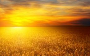 Картинка пшеница, солнце, природа, пейзажи, пшеничные поля, пшеничное поле