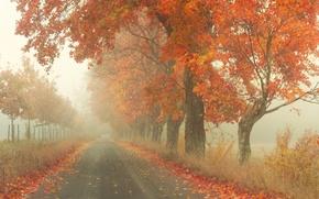 Картинка дорога, осень, деревья, туман, листва, by Robin de Blanche, Red Road