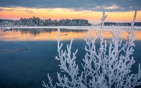 Картинка иней, осень, ветки, озеро, Швеция, Sweden, изморозь, Lapland, ноябрь