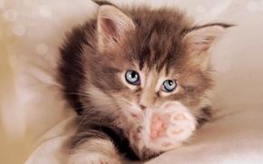Картинка кот, котенок, малыш, пушистик, лапка