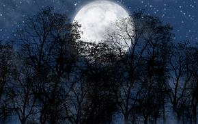 Картинка лес, ночь, луна, звезды.небо
