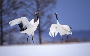 Картинка зима, снег, птицы, дерево, журавли