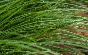 Картинка трава, капли, макро, стебли, зелёный