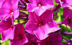 Картинка лето, макро, природа, Цветы, растения, лепестки, лиловый