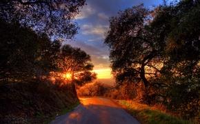 Обои дорога, деревья, пейзаж, закат