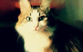 Картинка кошка, животное, Кот, Муся
