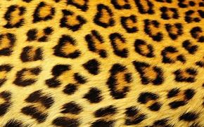 Картинка текстура, шерсть, пятна, леопард