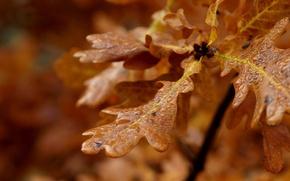 Картинка листья, капли, макро
