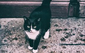 Обои глаза, тротуар, кот
