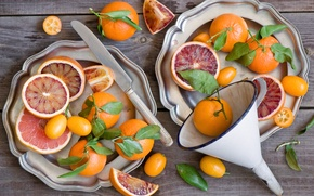 Картинка листья, апельсины, тарелки, лейка, фрукты, цитрусы, кумкваты