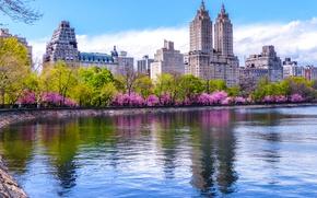Обои Central Park, цветущие, дома, деревья, Нью-Йорк, водоем, весна, США