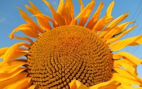 Картинка небо, желтый, yellow, подсолнечник, sunflower