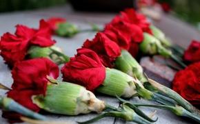 Картинка цветы, мемориал, гвоздики, красный цвет