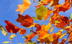 Картинка осень, небо, листья, ветки, дерево, ветви, желтые, красные