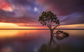 Обои небо, облака, озеро, дерево, Виктория, Австралия, зарево, Tenby Point
