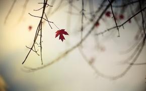 Обои природа, осень, ветка, лист