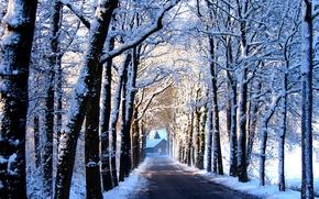 Обои дорога, деревья, аллея, дом, снег, зима