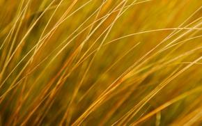 Картинка поле, осень, трава, природа, растение, луг