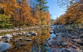 Картинка осень, лес, река, камни