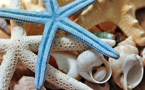 Картинка макро, ракушки, морская звезда