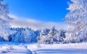 Картинка зима, лес, небо, солнце, снег, деревья, синева, голубое, поляна, тропинка