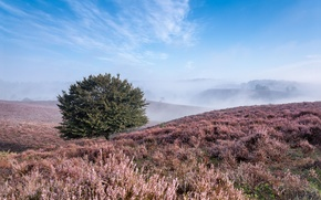 Картинка лето, трава, туман, дерево, холмы