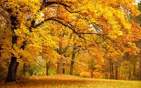 Обои листья, осень, золотая, деревья, желтые, парк