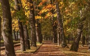 Обои Россия, Nevskaya Guba, парк, Санкт-Петербург, деревья, осень