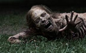 Обои Ходячие мертвецы, сериал, The Walking Dead, zombie, трава, serial, зомби