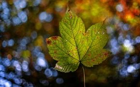 Картинка осень, природа, лист, боке