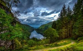Картинка лес, горы, природа