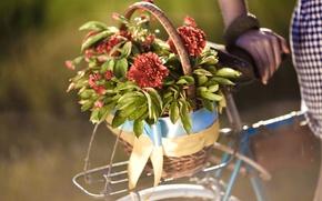Картинка листья, девушка, цветы, велосипед, фон, widescreen, обои, корзина, рука, размытие, wallpaper, цветочки, bicycle, широкоформатные, flowers, ...