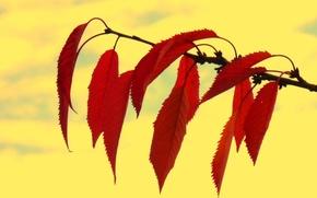 Обои осень, листья, природа, ветка