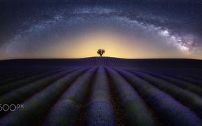 Картинка поле, небо, звезды, ночь, дерево, млечный путь, лаванда