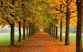 Картинка осень, природа, парк, алея, каштаны