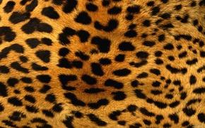 Картинка текстура, леопард, мех