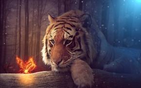 Обои Фантастика, Тигр, Взгляд, Животные, Бабочка