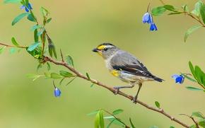 Обои листья, цветы, птица, ветка, перья, клюв, хвост