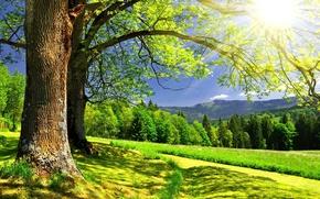 Картинка лес, лето, деревья, пейзаж, горы, солнце.