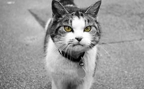 Обои кошка, кот, животное, улица, медальон, ошейник
