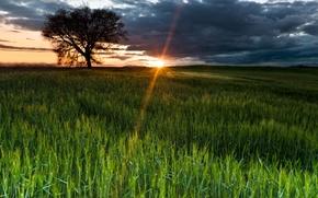 Картинка поле, небо, солнце, лучи, природа, дерево