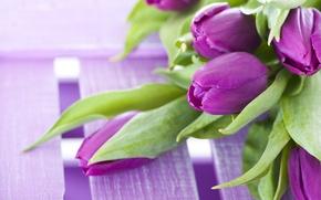 Картинка цветы, букет, фиолетовые, тюльпаны