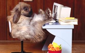 Обои офис, кролик, рабочее место, компьютер