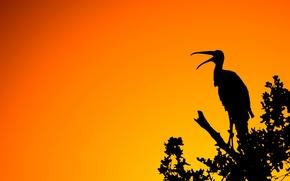 Обои ветка, свет, силуэт, птица, природа, закат