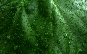 Обои капли, лист, Зеленый