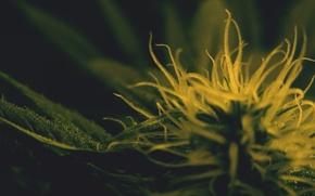 Картинка конопля, swirl, марихуана
